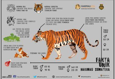 FHK_Harimau Sumatera_A3